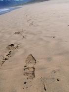 浜遍路道(大岐の浜)