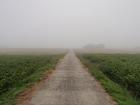 朝霧を歩く
