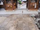 48番西林寺から猫