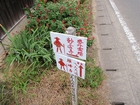 横峰寺へ8キロ