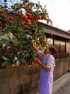 柿くれたおばちゃん